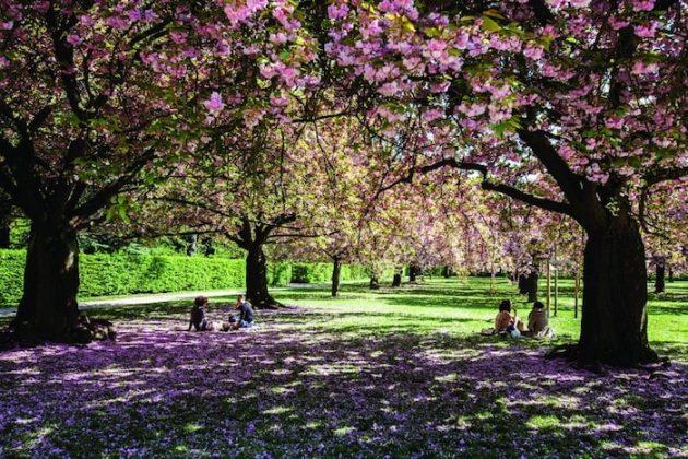 Albert Kahn, paris garden