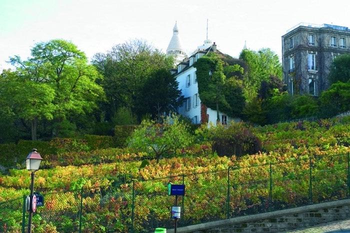 The Montmartre vineyard, rue des Saules