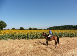Horse Riding in the Loire Valley