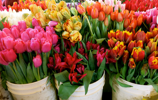 flowers at Pike Place market. Photo by Sue Aran