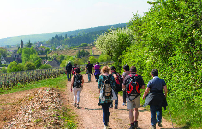 Walking through Burgundy's vineyards