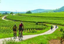 Biking in the Burgundy vineyards.