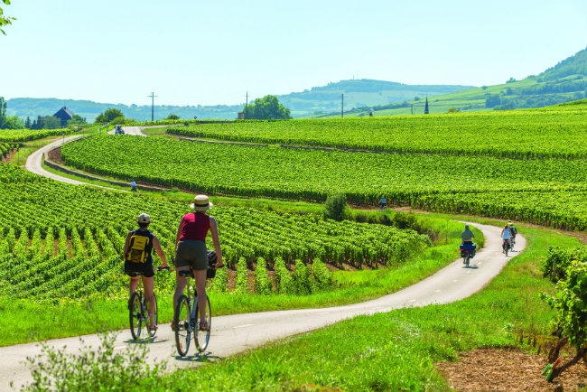 Biking in the Burgundy vineyards.