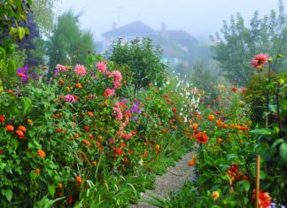 Monet's Clos Normand in Giverny