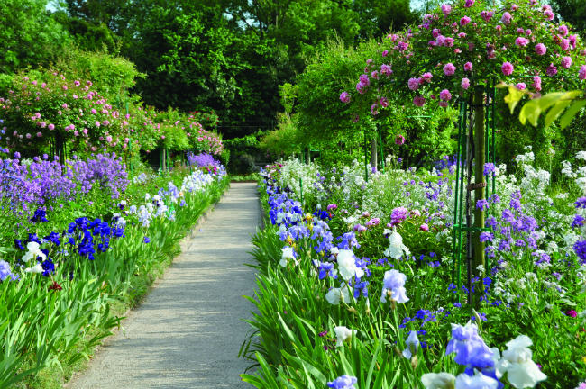 Roses and irises in Monet's Garden