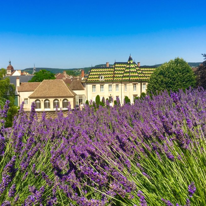 Strolling the lavender garden at Bouchard Pere & Fils headquarters at Chateau de Beaune.