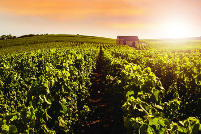 Great French Destinations Travel to Champagne and the Ardennes