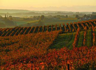 The vineyards of Armagnac