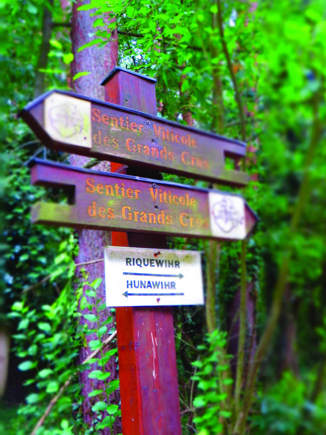 The Sentier Viticole des Grands Crus