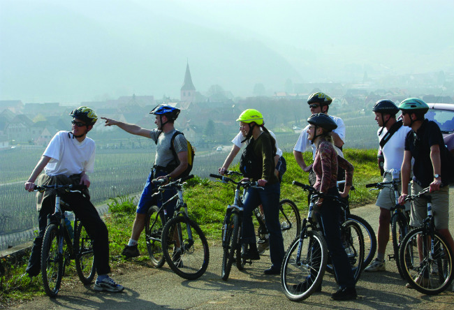 cycling Alsace vineyards
