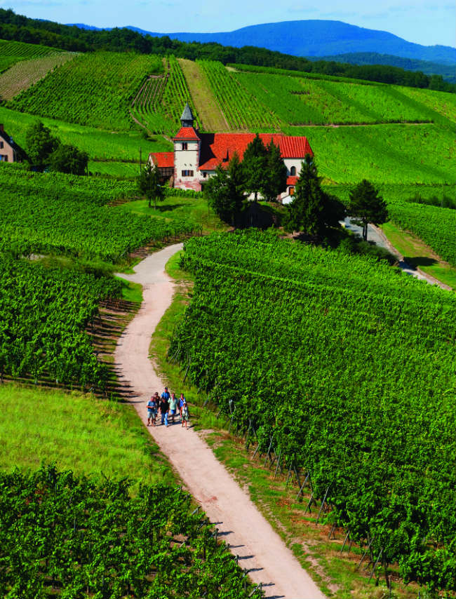 The Alsace wine route