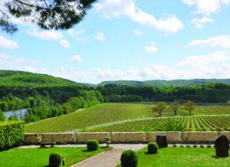 Languedoc vineyards