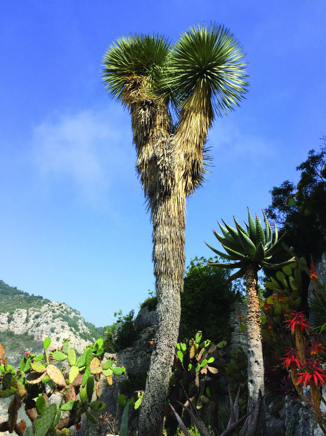 The riviera 39 s gardens and parks best botanical sites on the mediterranean coast - Jardin exotique d eze mulhouse ...