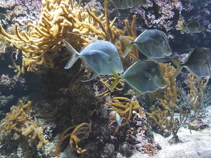 La Rochelle, aquarium