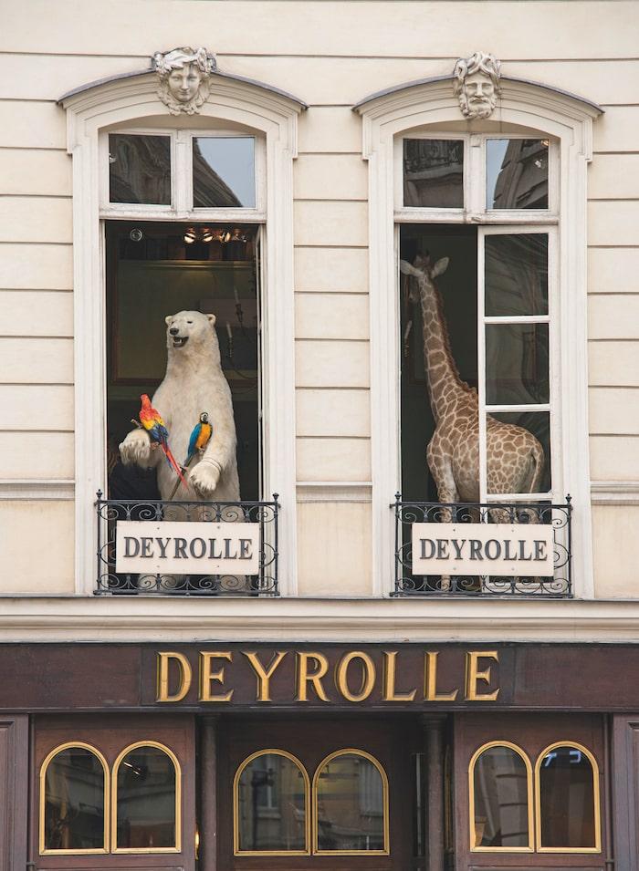 Maison Deyrolle
