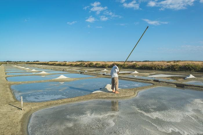 on the salt marshes