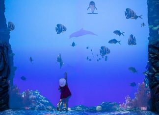 Musee Oceano