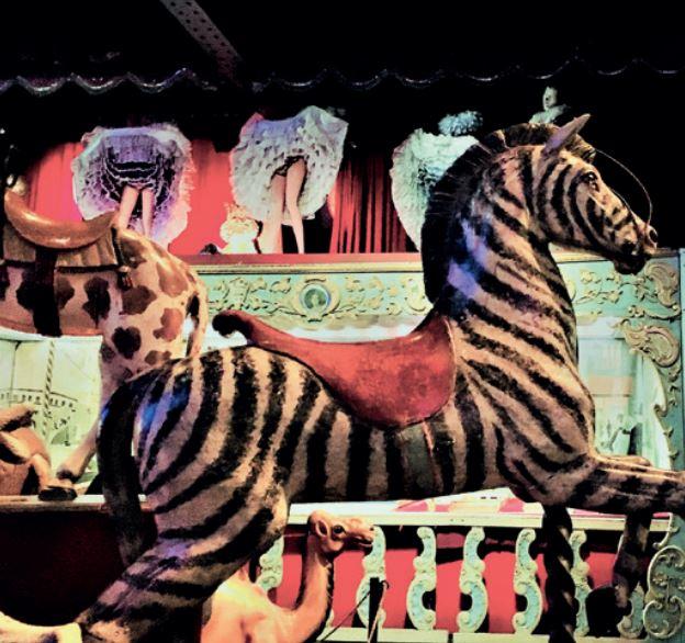 Enjoy a ride on a zebra