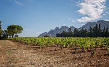 Vineyard and mountains: Château Romanin