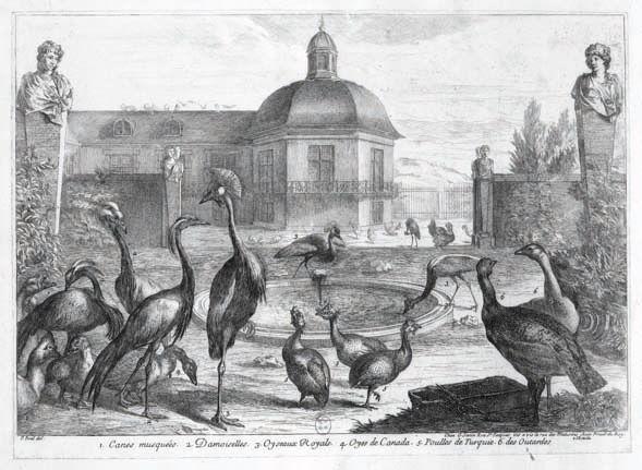 birds-menagerie