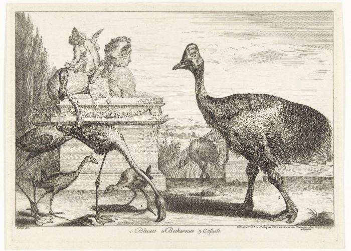 Kasuarissen, purperkoet en flamingo's, Peeter Boel