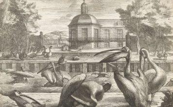 Pelikanen, Peeter Boel (attributed to), after Peeter Boel, 1670 - 1674