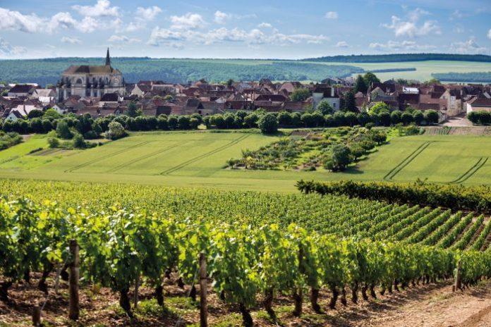 he rolling green landscapes of Coulanges-la-Vineuse in northern Burgundy