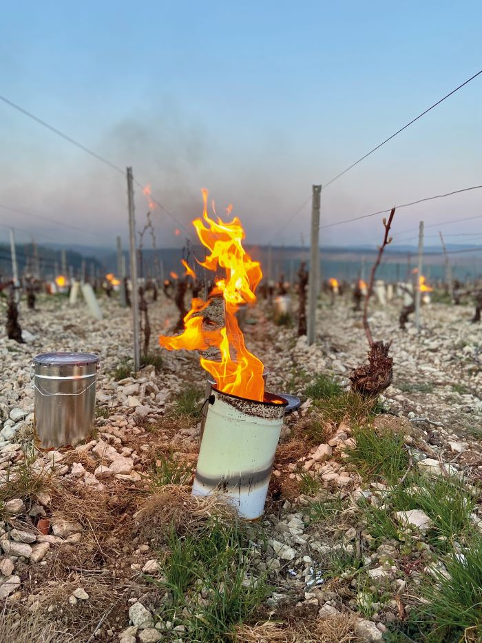Lamps being lit at the vineyards of Domaine Gueguen to protect the vines from the frosts (Photo Domaine Gueguen)