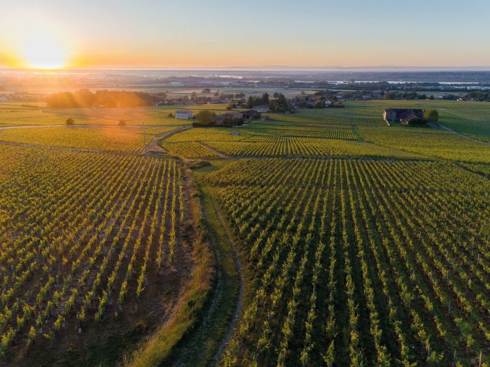 The vineyards of Le Clos Reyssie, near Chaintré, south of Mâcon (Photo BIVB, Michel Joly)