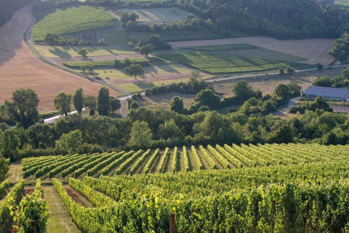 Visiting a vineyard (Photo BIVB, Michel Joly