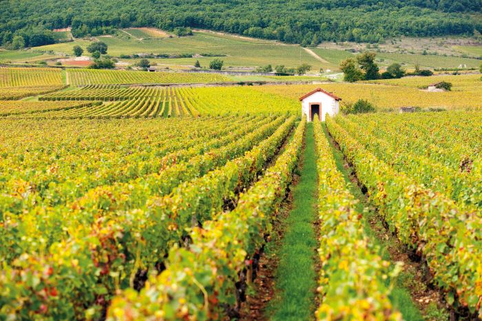 The gentle slopes of a Burgundy vineyard with a 'cabotte' in the distance (Photo Alain Doire, Bourgogne-Franche-Comté Tourisme