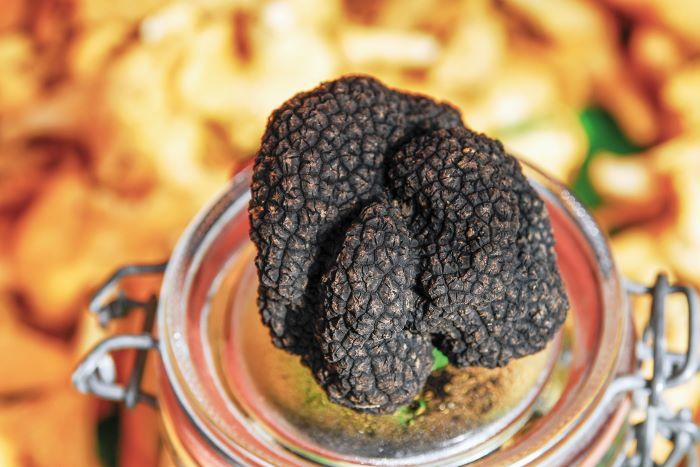 Treasure-hunting for truffles in the Burgundy countryside (Photo Alain Doire, Bourgogne-Franche-Comté Tourisme