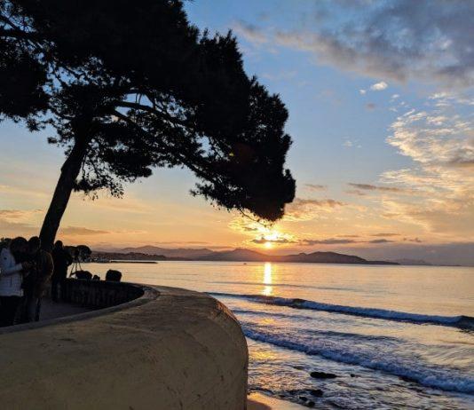umbrella pine and sunset